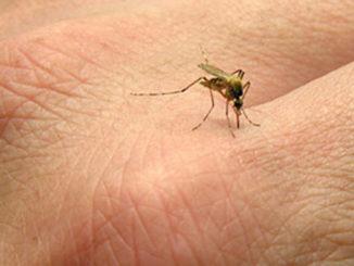stop_mosquito_bites